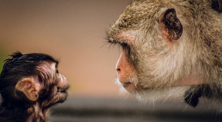 Don't let your Chimp take charge of your money